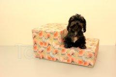 Schody pro psa Oranžové květy Pelíšky pro psy - Schody pro psy